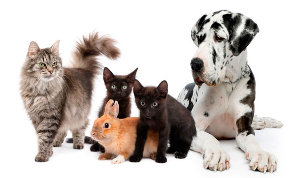 What Is Cat Flu In Dogs